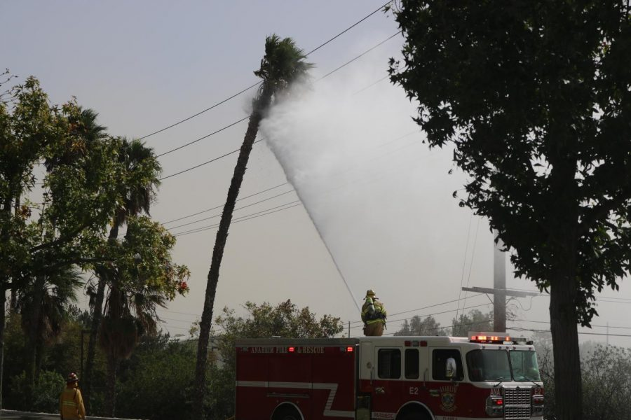 While standing on Anaheim Fire Department's Engine No. 2, a firefighter uses a hose to extinguish a palm tree's flames across the street from the 20s building on Oct. 26. Firefighters had been dispatched to the Sunny Hills campus twice -- at 11:36 a.m and again at 12:20 p.m. to respond to a palm tree that struck power lines and caught fire twice because of winds reaching 20 mph.